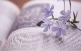 高考英语书面表达五种基本句型(应试专用版)